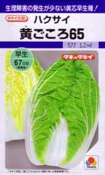 黄ごころ65