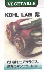 コールラビ(紫系)