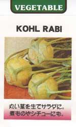 コールラビ(白系)