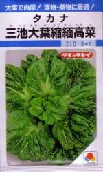 三池大葉縮緬高菜