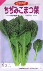 ちぢみこまつ菜