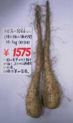 トロフィー1066長芋