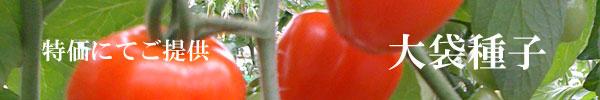 大袋種子(特価・営利栽培向け)