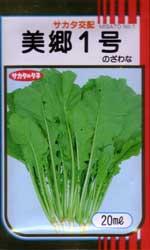 美郷1号(野沢菜)