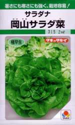 岡山サラダ菜